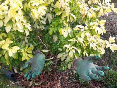 green gloves bush 2018
